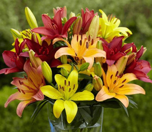 Những hình ảnh về hoa ly đẹp nhất   15