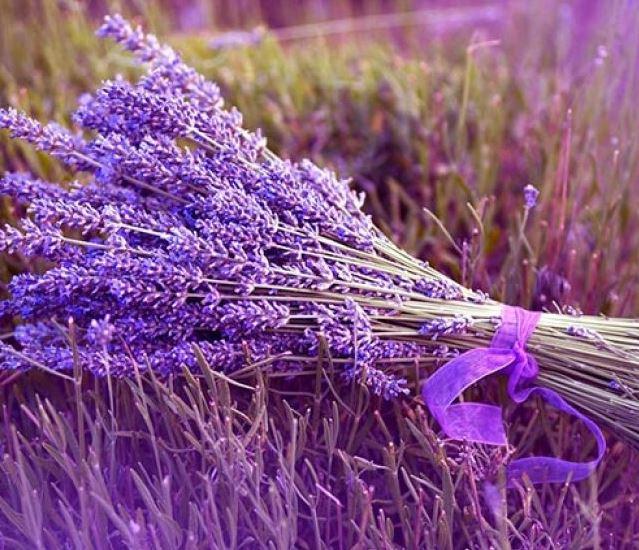 Hình ảnh đẹp nhất về hoa lavender 12